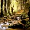 thady: (DIV  -  autumn)