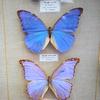 shesellsseashells16: (butterflies)