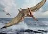 yesint: (pteranodon1)