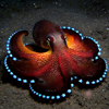 frith_in_thorns: (.Octopus)
