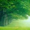 puckmls: (green, summer, trees)