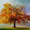 isil_lote: (fall)