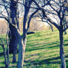 corbae: trees (trees)