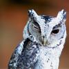 benedict: (owl wink)