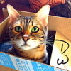 digitalwave: (Cat in the Box!)