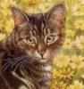 linen_shine: (Кошка в ромашках)
