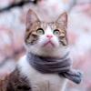 tainry: (scarf neko by ?)