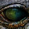 incinereous: (HJ, crocodile)