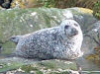 bluewolf458: (Seal by SC)