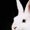 aether: (HG: The white rabbit.)