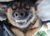 kuznec_d_k: (собачья улыба)