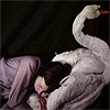 avia: A girl lying on a swan and hugging them. (hug a swan)