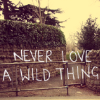 "avia: Text: ""Never love a wild thing."" (never love a wild thing)"