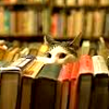 sixbeforelunch: image of a cat peaking out from behind a row of books, no text (cat and book)