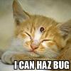 piranha: kitten with ladybug on forehead (i can haz bug)