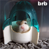 benedict: (hamster brb)