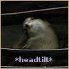 "sweet_sparrow: A photo of a sparrow with its head tilted and the text ""headtilt"". (E: headtilt)"