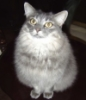 shadowc44: Photo of my gray cat, looking up (Default)
