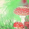 featherhearted_girl: A small grouping of fly agaric mushrooms in green grass (mushroom, fly agaric)