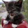 zlabya: Angry kitten in a teapot (AngryKitten)