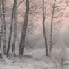 lireavue: Pale sunrise (or sunset) through winter trees with snow covering the ground. (of my discontent)