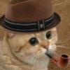 dakarant: (кот)