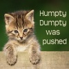 dhamphir: (humpty dumpty was pushed)