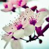 cithara: (nature-flower)
