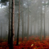 sistabro: (red misty forest)