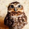 sistabro: (owl)