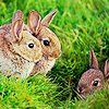 me_ya_ri: small herd of adorable plot bunnies (Plot Bunny Herd)