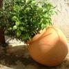 jimihi: (pot plant)