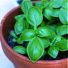 jimimi: (my own basil)
