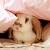 shesellsseashells16: (bunny)