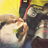 turlough: otter with camera ((other) photography)