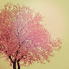ziparumpazoo: Tree covered in pink frost (me&you)