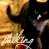 snickfic: Miss Kitty Fantastico stalking (Miss Kitty)