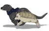 spookywanluke: Otter and Hedge (Otter)