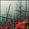 squeemu: ([me] rose garden)