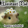 morbane: Guinea pig with a daisy crown, text Assistant Mod - happy Yuletide (flower crown)