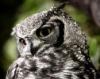 wintrymix: (owl)