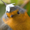 volleybird: (flower, bird, square) (Default)