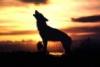 mazzarino: (восход молодого волчонка)