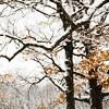 fajrdrako: (Winter trees)