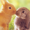 schizophrenickitty: (bunnies)