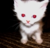 melkiythegreat: (страшнее кошки зверя нет)