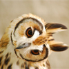 benedict: (owl headtilt)
