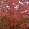 rosaw: (fall)