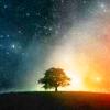 impossiblemyth: (Immortal Tree)