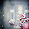 avia: Pink flowers in a cold snowy town, giving a distant feeling. (it is distant)